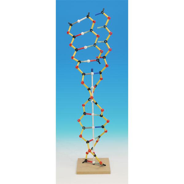 Image of Cochranes Of Oxford DNA-RNA Orbit Kit - 146 Piece Set - Assembled ...